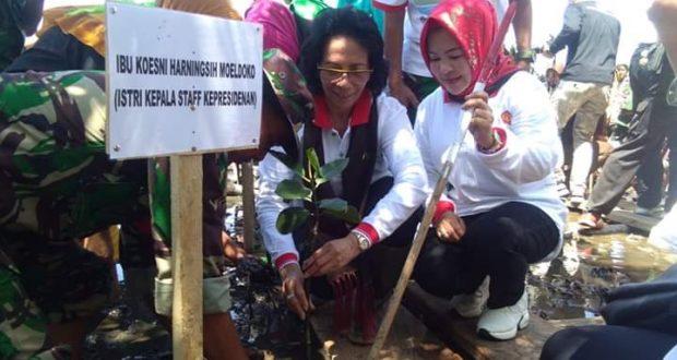 Ibu Moeldoko Hadiri Penanaman 5000 Pohon Mangrove di Pohuwato