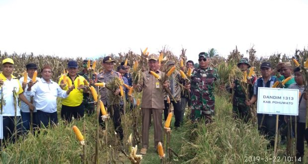 Panen Raya Pohuwato, Bupati Syarif Mbuinga Salurkan Bantuan Bibit Jagung
